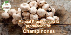 Manual de produccion de champiñon