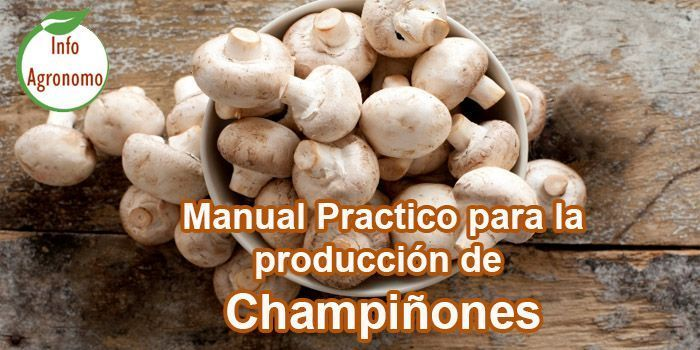 Manual de produccion de champiñon