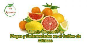 Manejo de plagas y enfermedades en citricos
