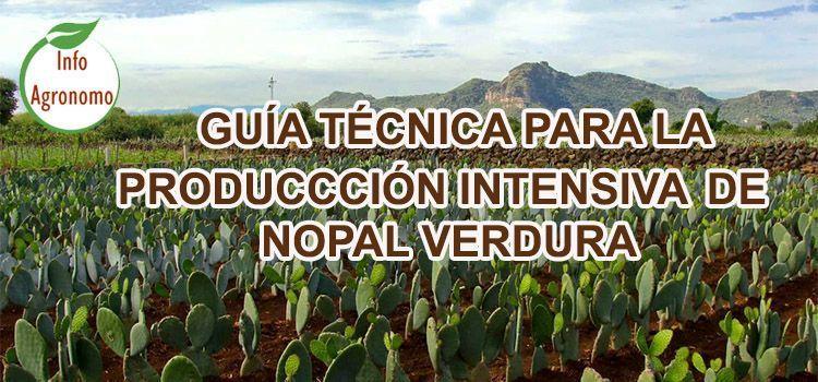 Cultivo de nopal verdura