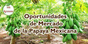 estudio de mercado de la papaya