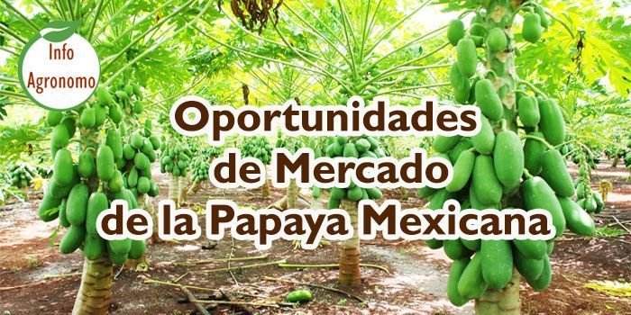 estudio de mercado de la papaya