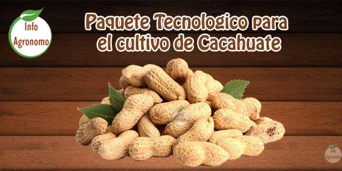 guia para el Cultivo de cacahuate