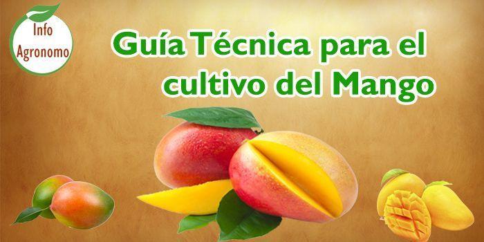 Guia para el cultivo de mango