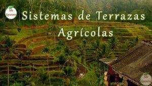 Sistemas de terrazas agricolas