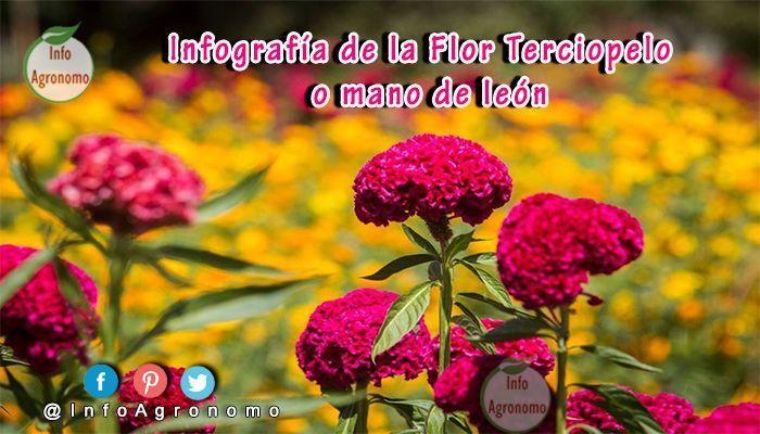 Flor de terciopelo