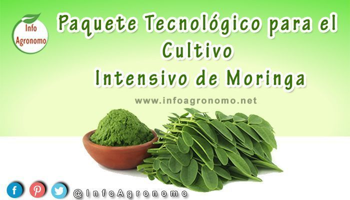 Manual del cultivo de moringa PDF