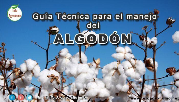 Guia de cultivo de algodon