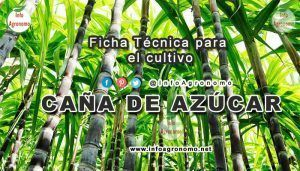 Guia de cultivo de caña de azúcar