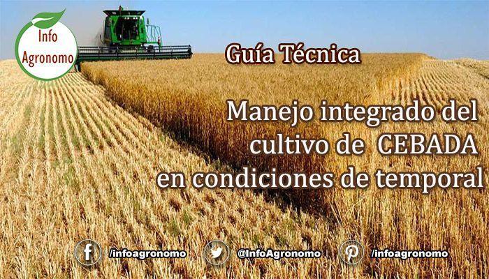 Guia de cultivo de cebada
