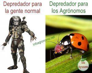 Memes depredador