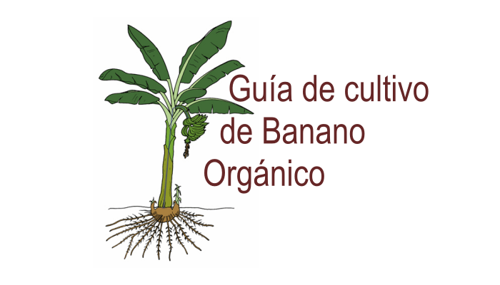 Guia de cultivo de banano organico