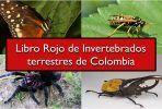 Invertebrados terrestres de colombia