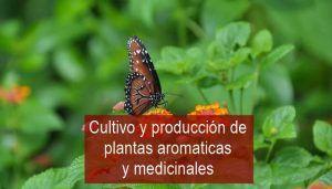 Guia de cultivo de aromáticas y medicinales