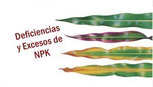 Sintomas de carencias de nutrientes esenciales