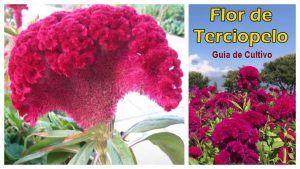 Guia Flor de Terciopelo PDF