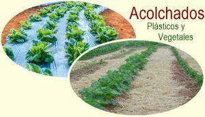 Manual acolchados plasticos y vegetales