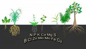 nutrientes esenciales plantas
