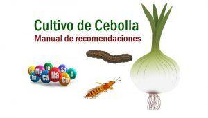 Manejo del cultivo de cebolla
