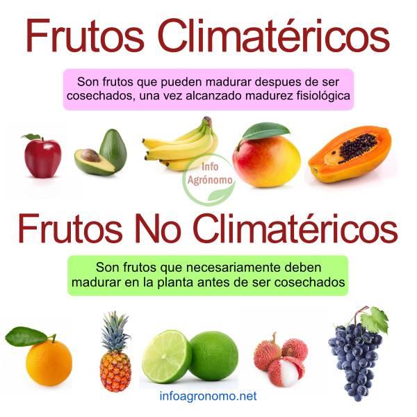 Ejemplos de Frutos climatéricos y no climatéricos