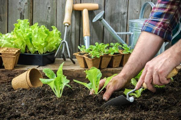 Beneficios de los almácigos, plantas sanas y vigorosas