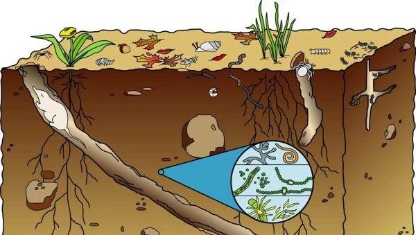 La vida en el suelo