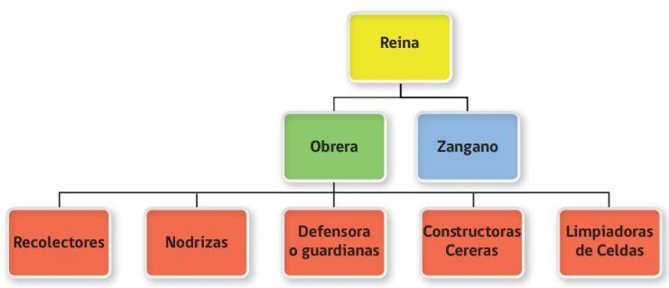 Jerarquía de la colmena