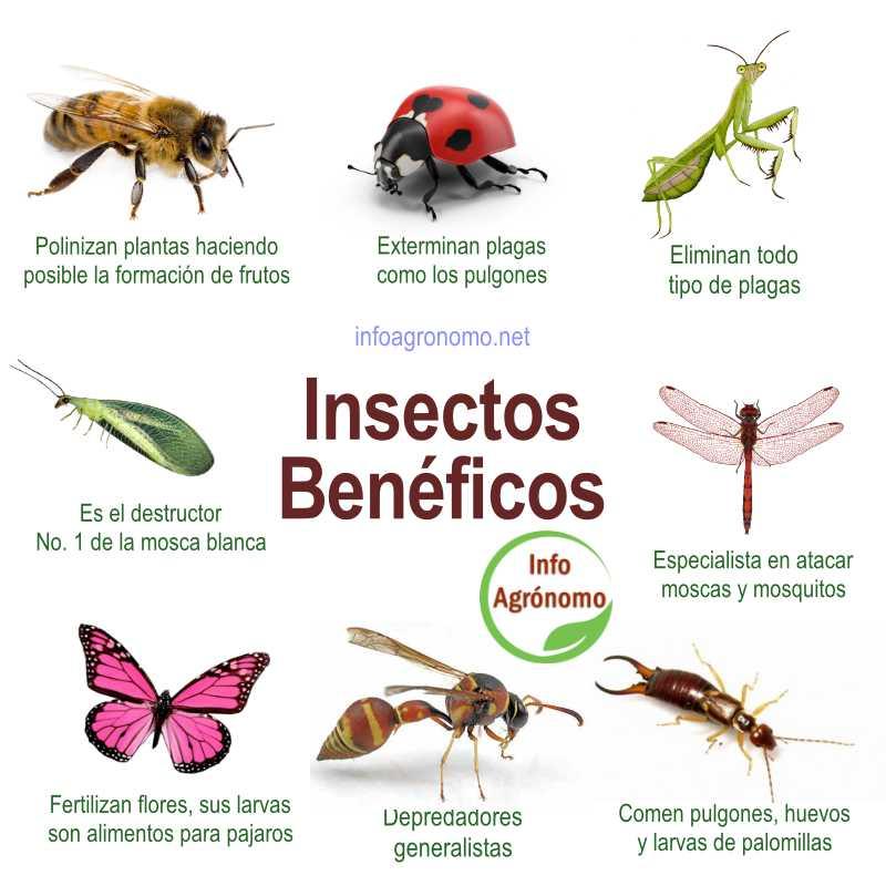 Insectos beneficos